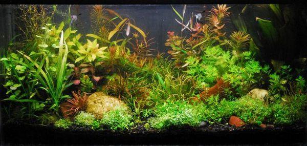 Аквариум видове растения и избор