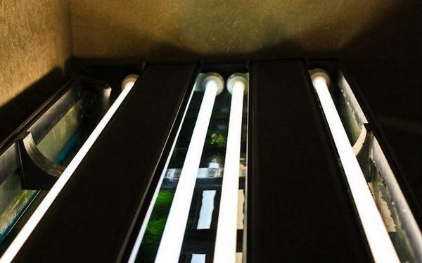 Луминесцентни лампи за аквариум