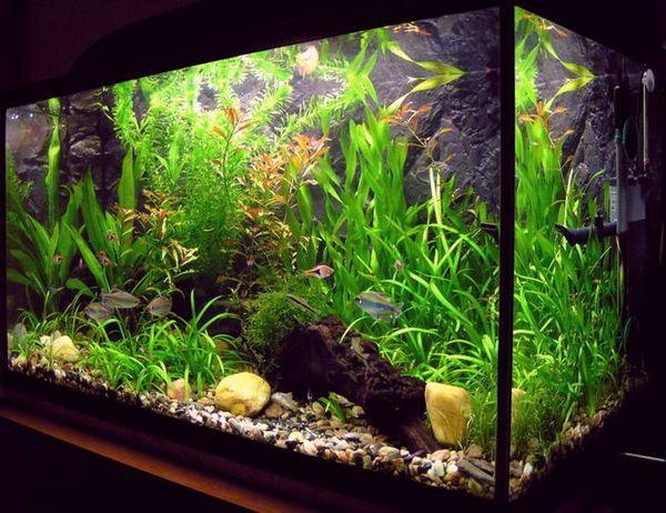 Пречистване на вода в аквариум