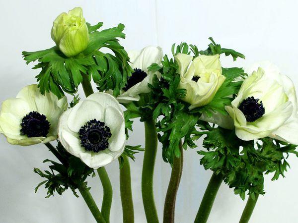 Тимове и особености на цветята