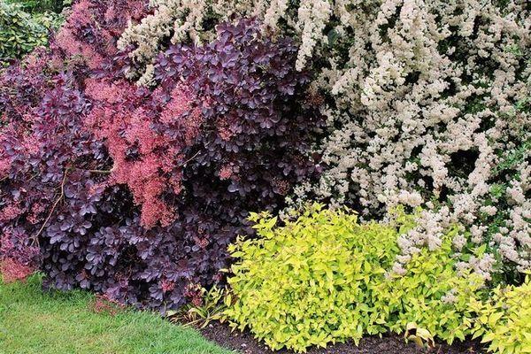 Декоративни храсти в ландшафтния дизайн