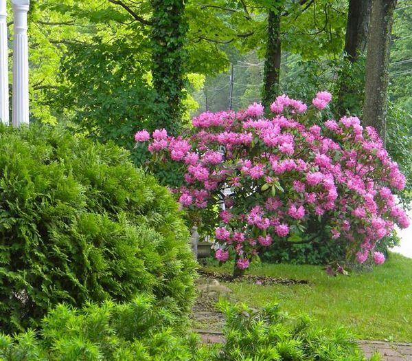 Единични храсти