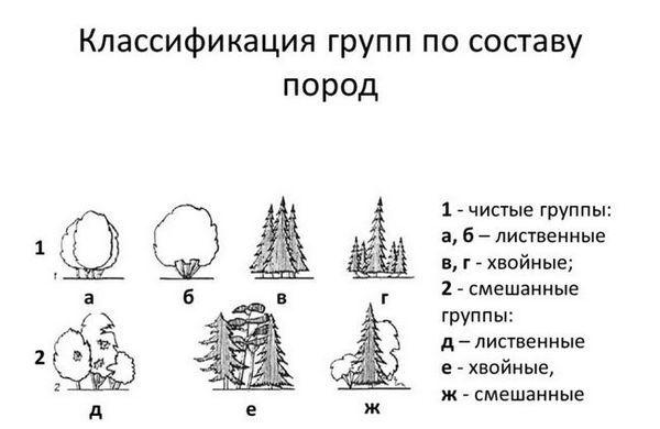 Класификация на храсти по видове състав
