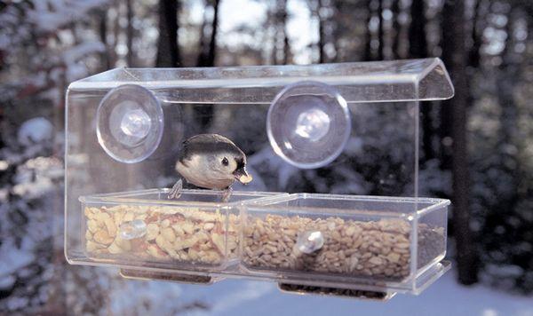Птиче захранващо Фото