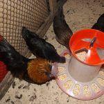 Снимка 7: Прост захранващ механизъм за птици