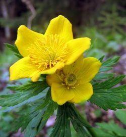 Жълто-жълто