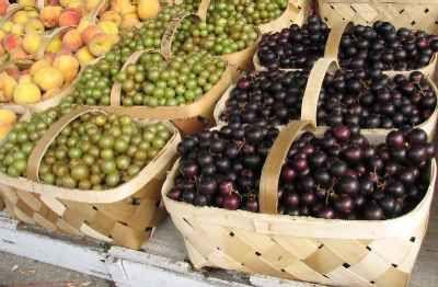 Съхранение на грозде