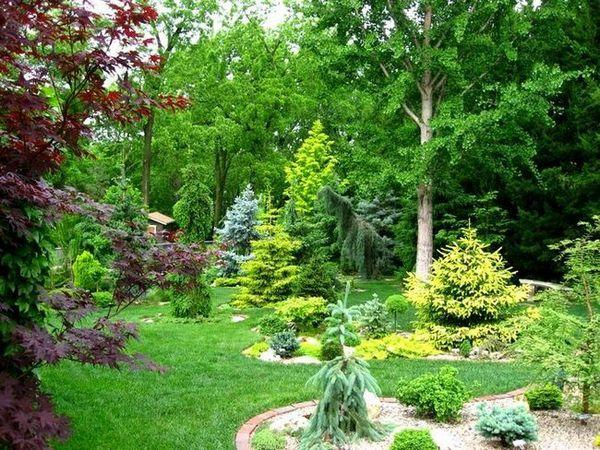 Средни иглолистни дървета