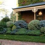 Снимка 10: Цветни иглолистни храсти