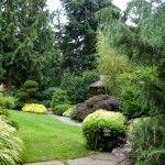 Снимка 8: Средни иглолистни дървета