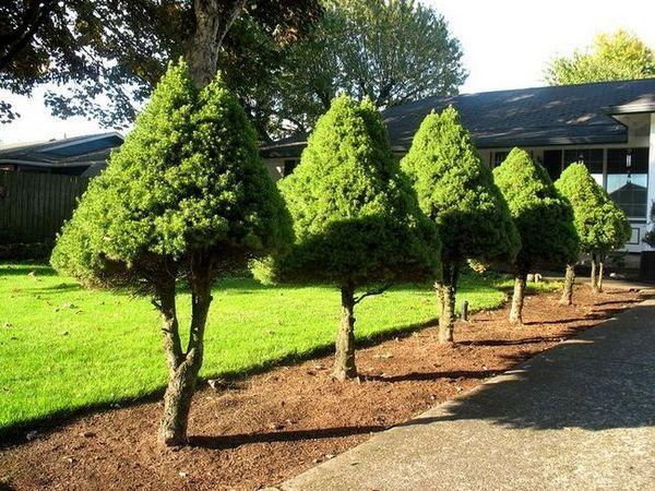 Дървета в един ред