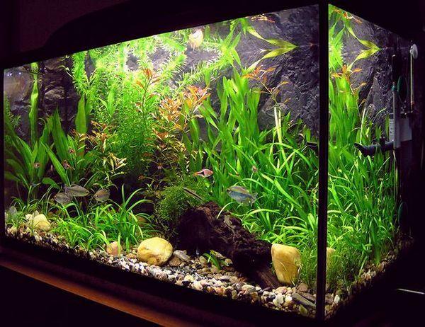 Красив аквариум дизайн