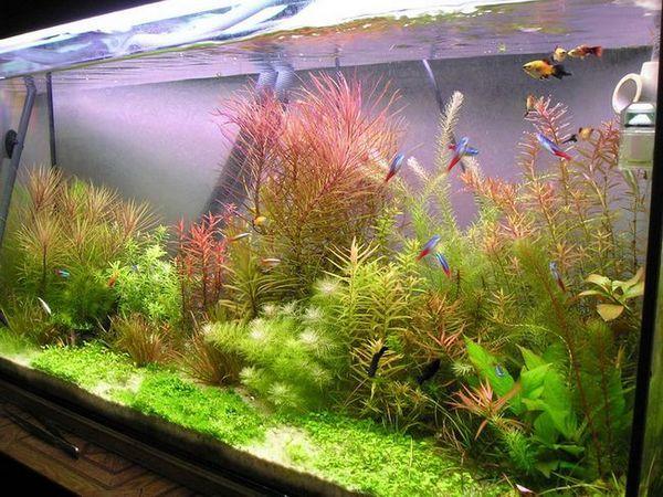 Комбинация от растения в холандски аквариум