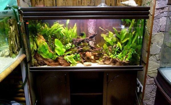 Състав за аквариум в холандски стил