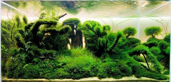 Естествен аквариум стил