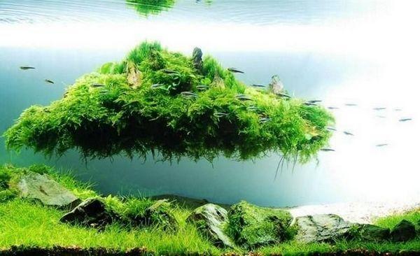 Плаващ остров в аквариума