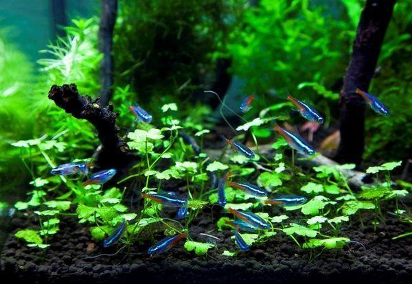 Ярки риби в аквариума