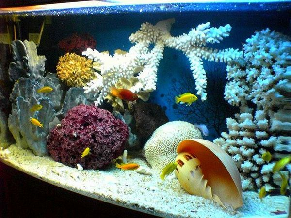 Ясен аквариум в морски стил