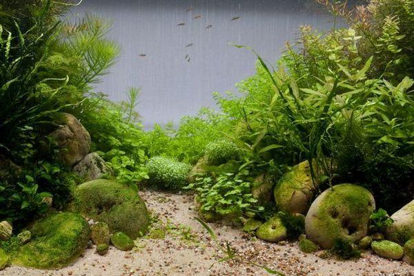 Съвместимост на растенията в аквариума