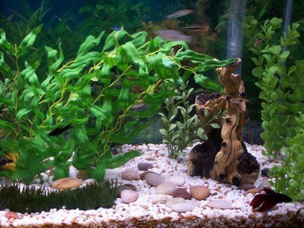 Състав в аквариума