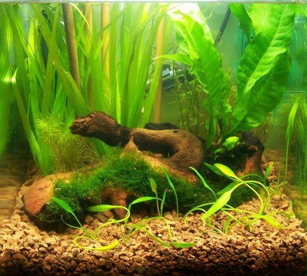 Декориране на дъното на аквариумните камъчета