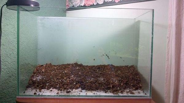 Грунд за аквариума