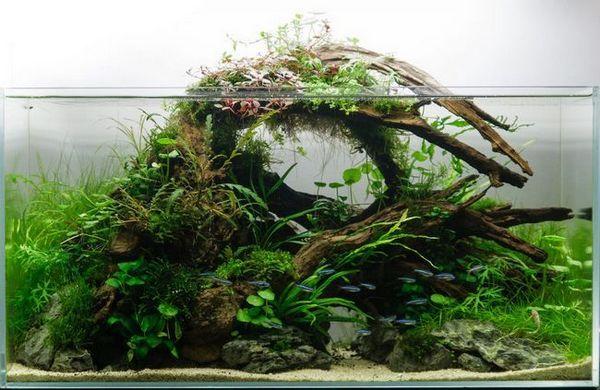 Скуби в аквариума