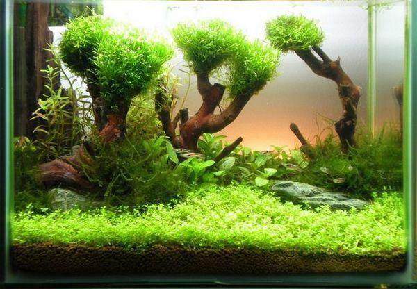 Дървета от удари в аквариума