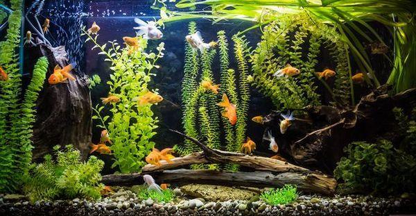 Корени в дизайна на аквариума