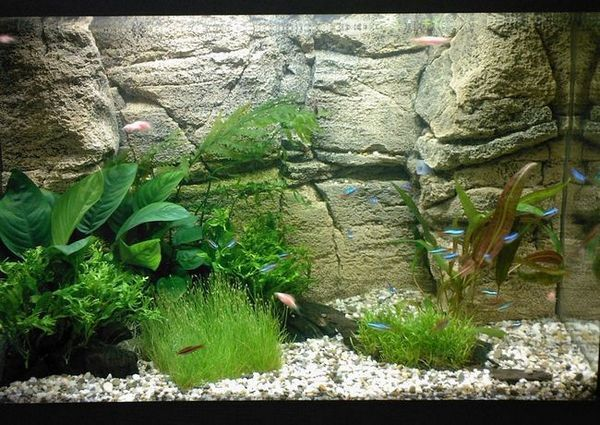 Каменна основа за аквариум