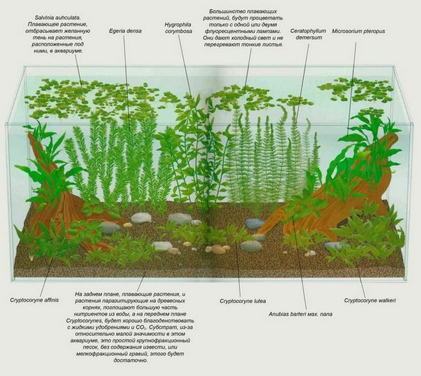 Растения за аквариум