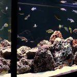 Снимка 51: Създаване на камъни с аквариум