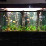 Снимка 52: Дървета в аквариум