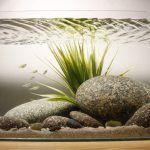 Снимка 55: Калдъръмени камъни в аквариума