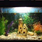 Снимка 56: Малка къща в аквариума