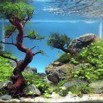 Снимка 58: Дизайн на аквариума