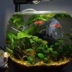 Снимка 8: Кръгъл аквариум