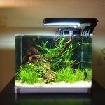 Снимка 9: Квадратен аквариум