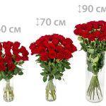 Снимка 41: Дължина на розите