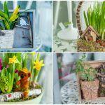 Снимка 77: Композиции с цветя в саксии