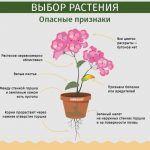 Снимка 80: Опасни признаци на стайни растения