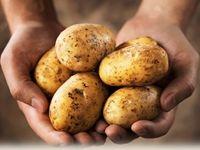 Кога да почистите картофите: събиране и съхраняване на картофи