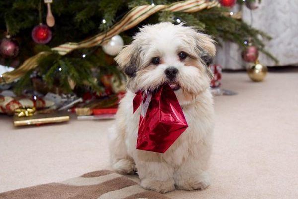 Подарък за годината на кучето