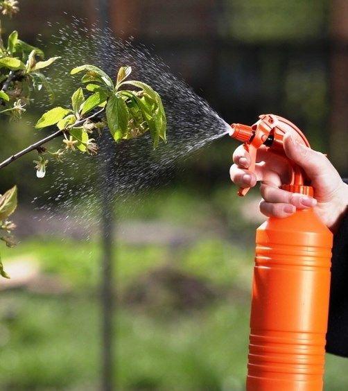 Обработка на градини от болести и вредители
