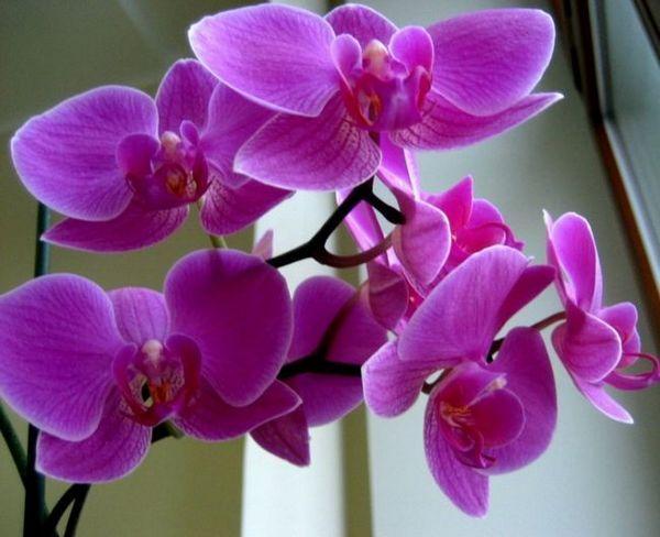 Еднокопитни и двусемеделни растения