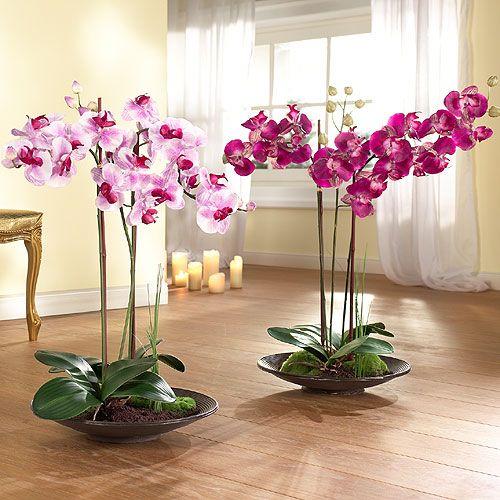 Орхидеи отглеждат, засаждат, грижат