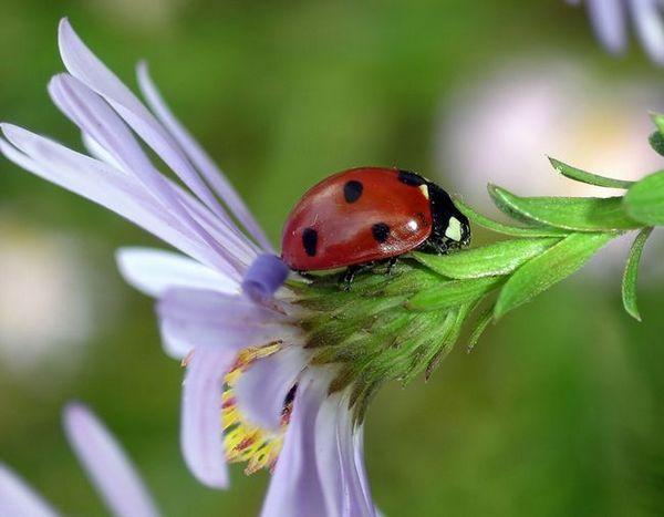 Полезни насекоми