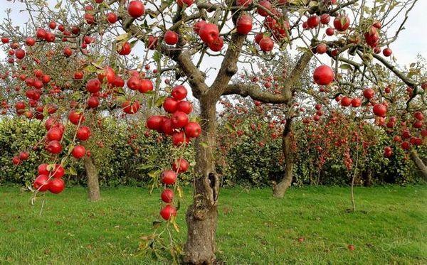 Плодова овощна градина