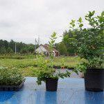 Снимка 15: Възможности за доставка на боровинки