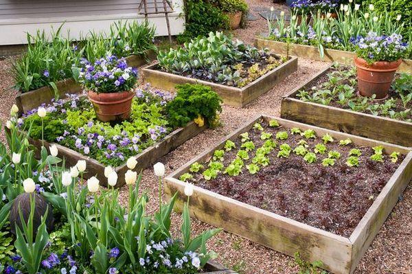 Опции за оформление на вилата са няколко идеи за красива градина